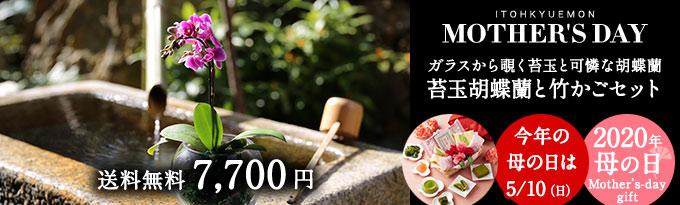 苔玉胡蝶蘭と母の日竹かご