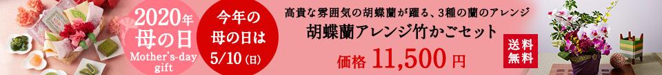 胡蝶蘭アレンジメント竹かごセット