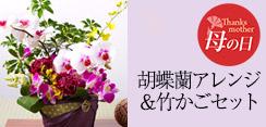 胡蝶蘭竹かごセット